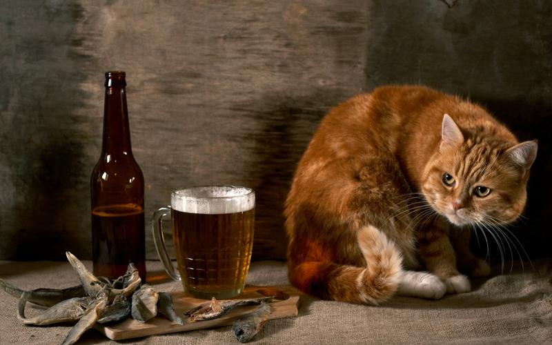 pisici bere si alte linkuri culinare