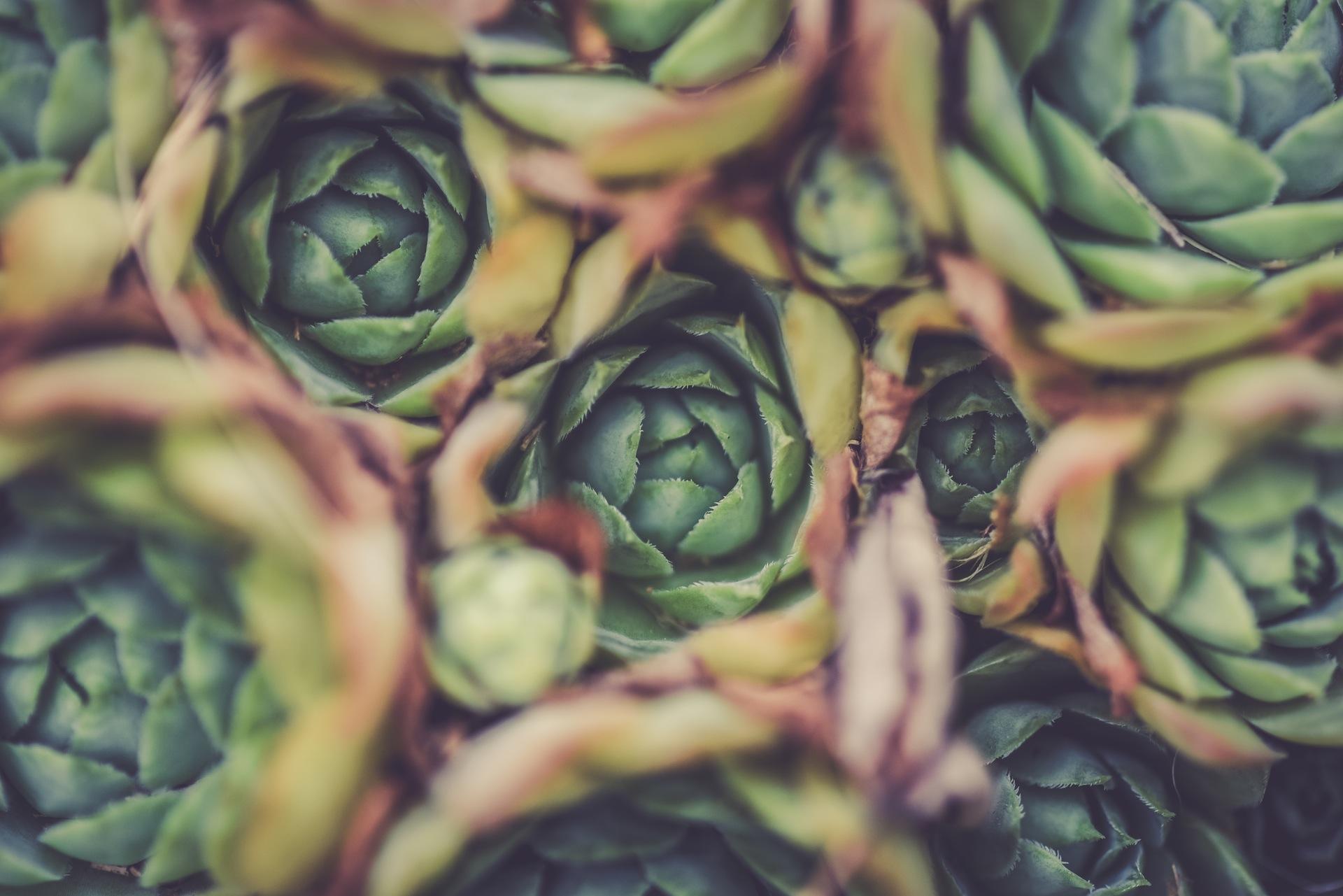Jurnalul navigatorului mîncău – 7 povești culinare apărute în 2016